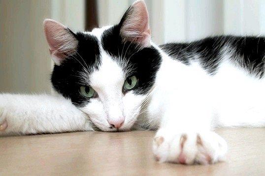 Кішка проявляє невдоволення - як позбутися запаху?