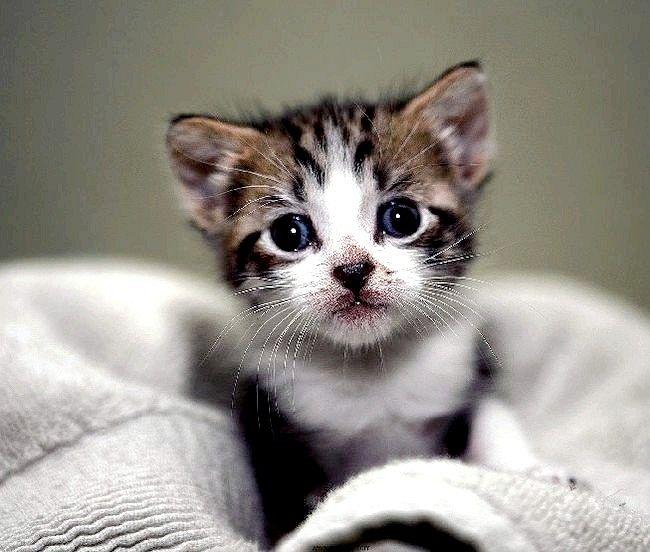 Чим годувати кошеня в 1,5 місяця