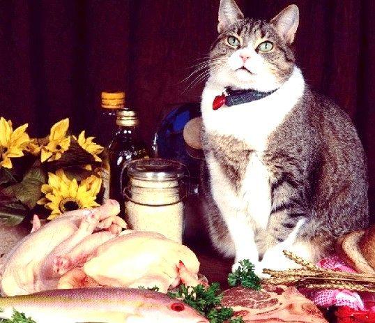 Чи можна годувати домашню кішку сирим м'ясом