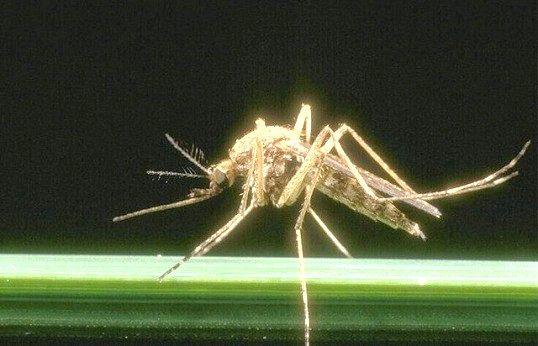 Народні рецепти проти комарів
