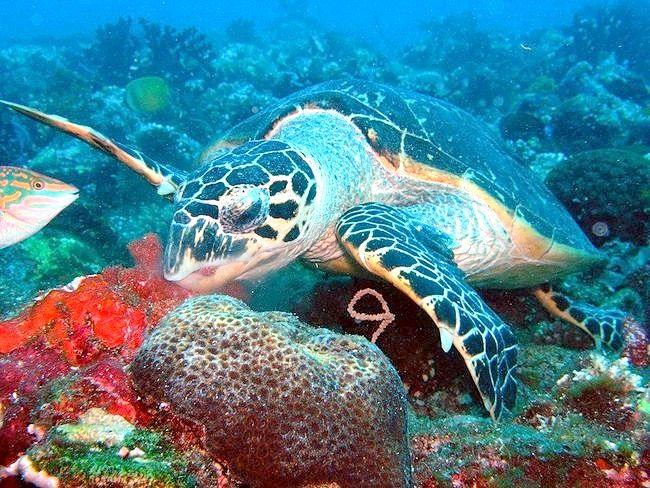 черепахи на Галапагоських островах