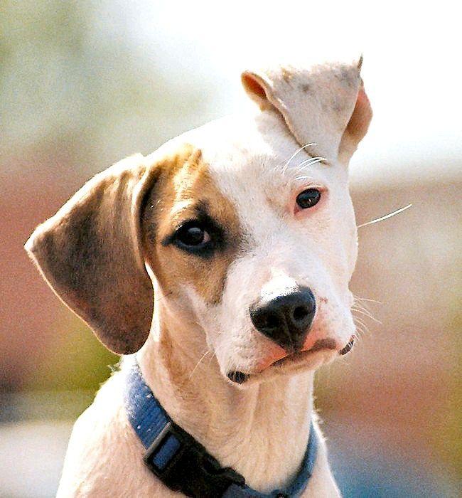 Як лікувати очі у собак