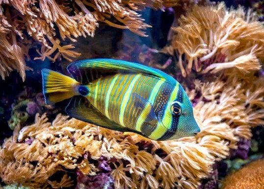 Чому в акваріумі з рибками швидко мутніє вода