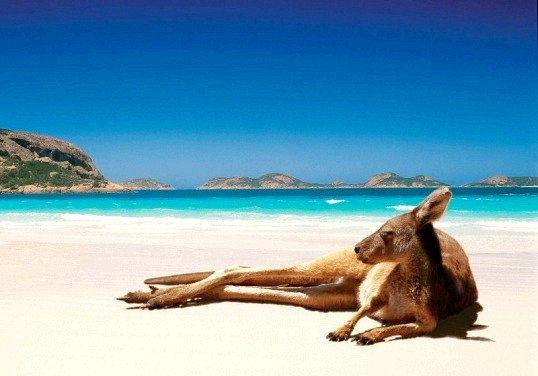 Чому в австралії немає великих хижаків