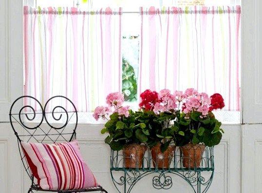 Правильно підібрані кімнатні квіти