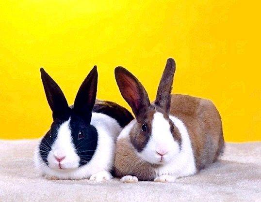 Переваги вольєрного утримання кролів