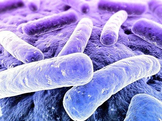 При якій температурі вмирають хвороботворні бактерії