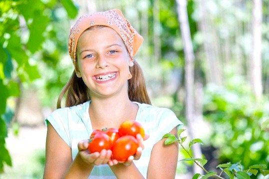 Ранні сорти помідорів для відкритого грунту