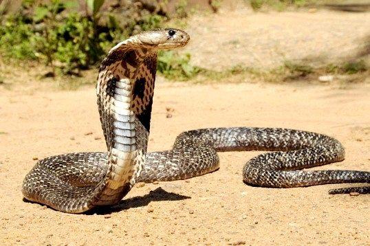 Найнебезпечніше тварина в світі