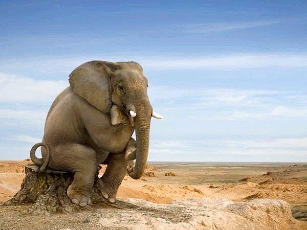 як зробити хобот слона