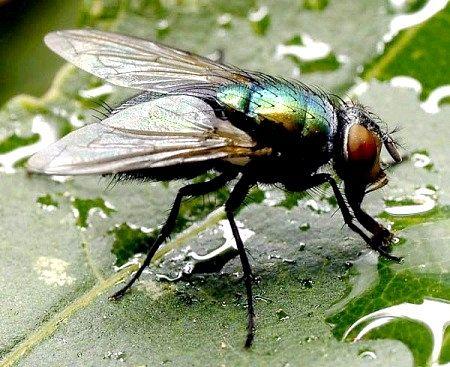Де зимують мухи