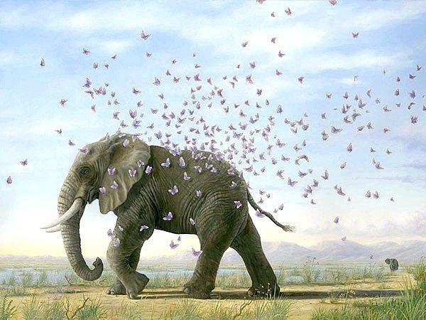 Скільки живуть слони