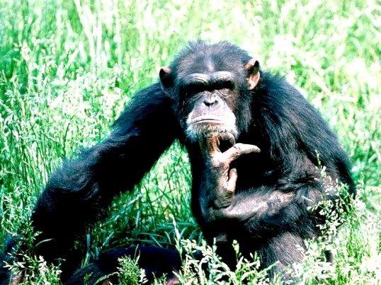 Порада 1: яка тварина саме розумне