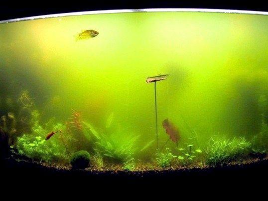 Порада 1: чому мутніє вода в акваріумі