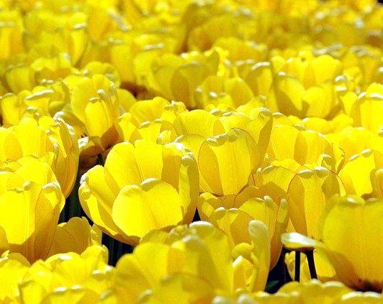 Вплив жовтого кольору на людину