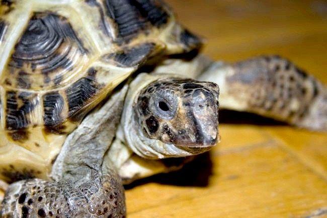 ім`я черепахи для хлопчика