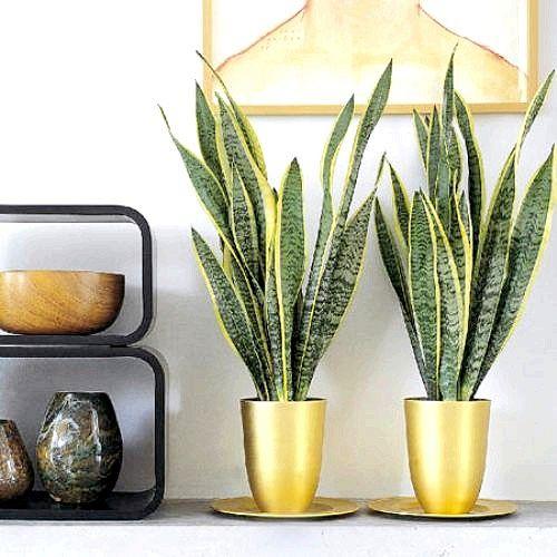 Вибираємо невибагливі рослини для дому